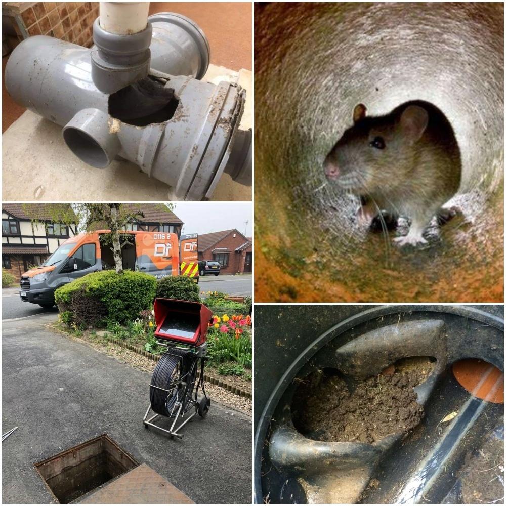 Rat Problem, Rat Infestation, Rat Nest in Drains, Rats in Drains Leicester