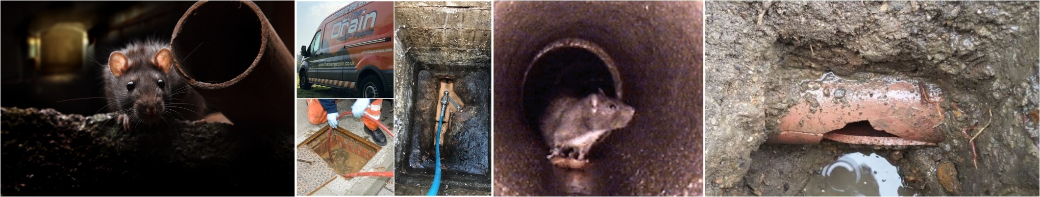 Rat Detection & Removal from Drains Leicester - by The Drain People
